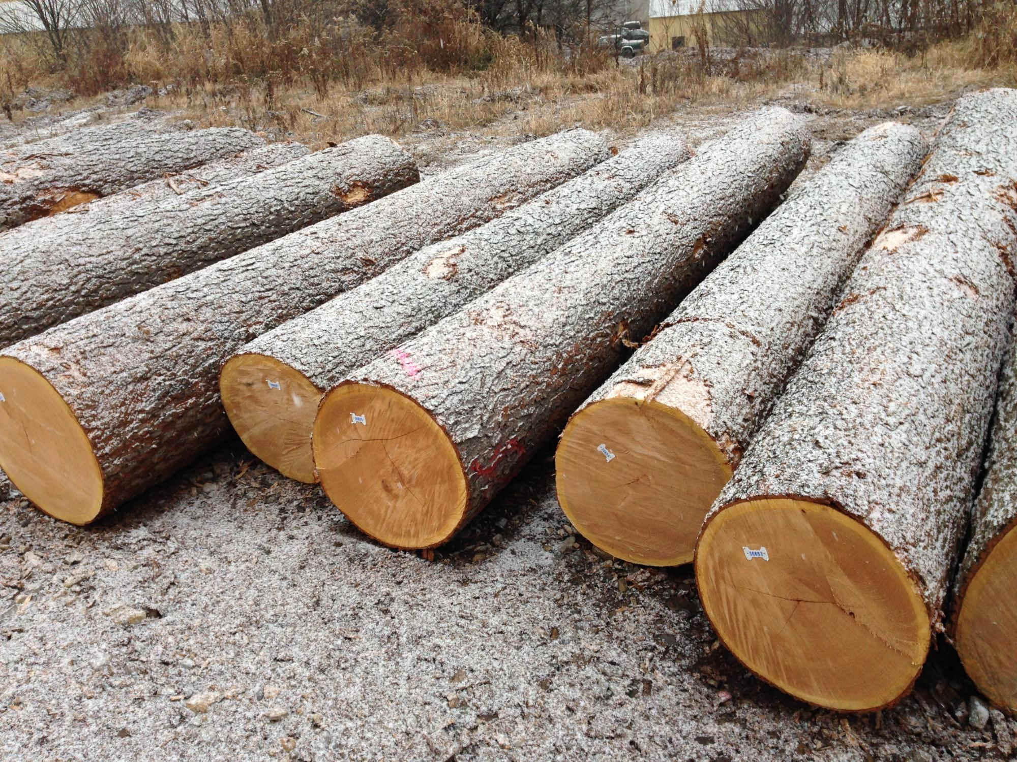 American Hardwood, Timber Products, Export